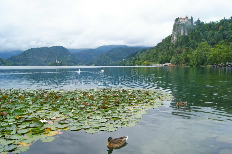 Cloudy Bled. Landscape, buildings, lake and ancient Castle in Bled, north west of Slovenia royalty free stock images