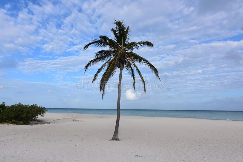 Cloudy and blue skies in Aruba with a palm tree stock photography