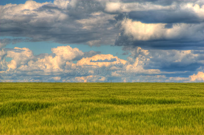 Cloudy day over the field stock images