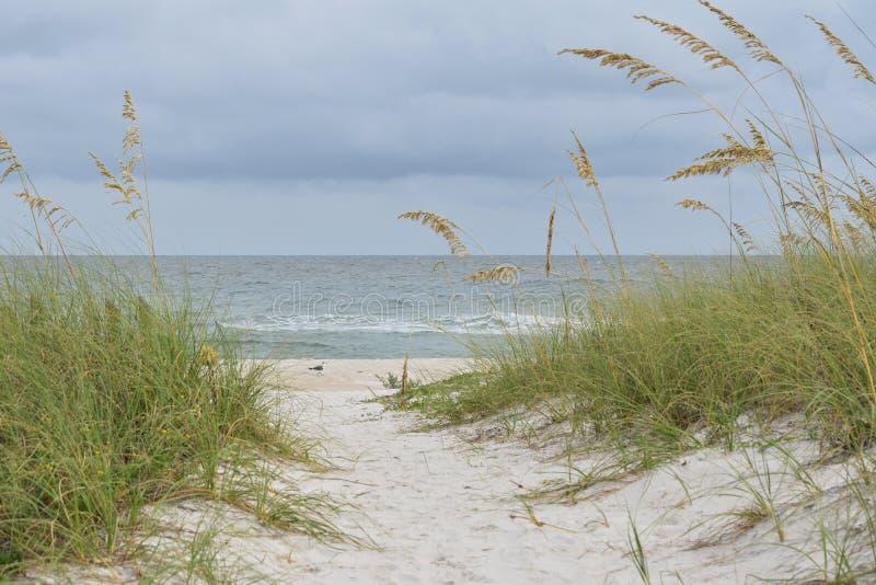 Empty beach and a sea gull stock image