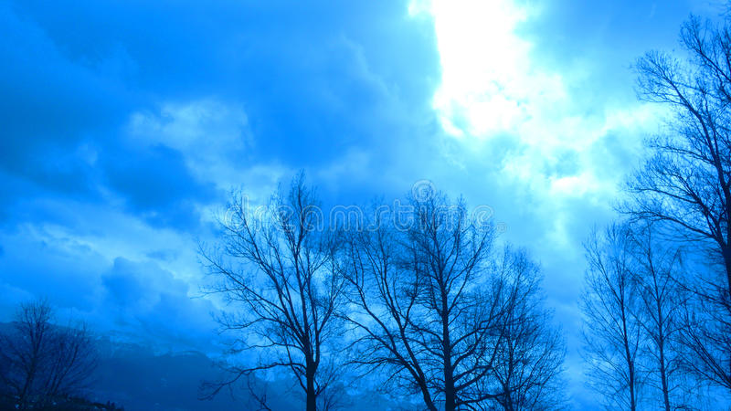 Cloudy forest royalty free stock photos