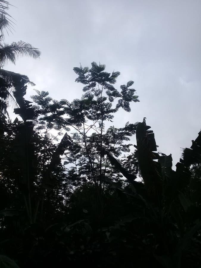 Cloudy morning day. Coloudy morning. Sky, colo, coloudy, day, rain stock photos