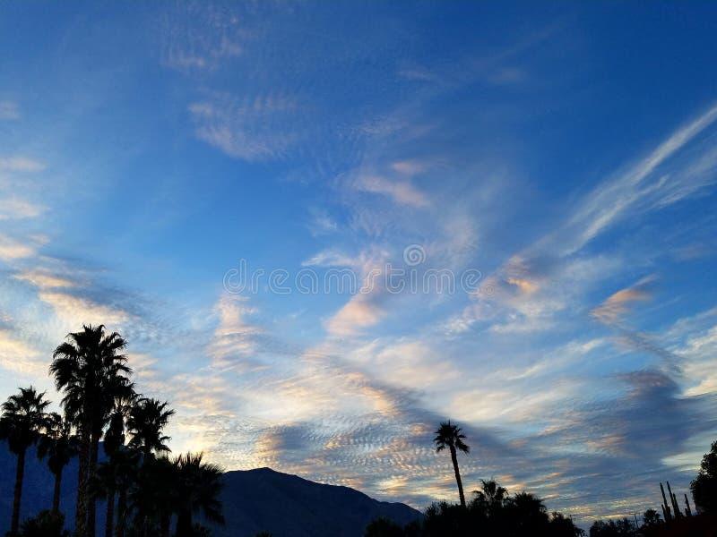 Cloudy palms stock photo