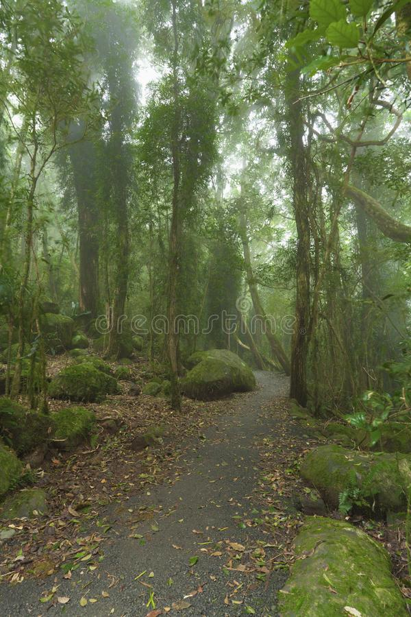 Download Cloudy rainforest. stock photo. Image of mythical, mossy - 24890074
