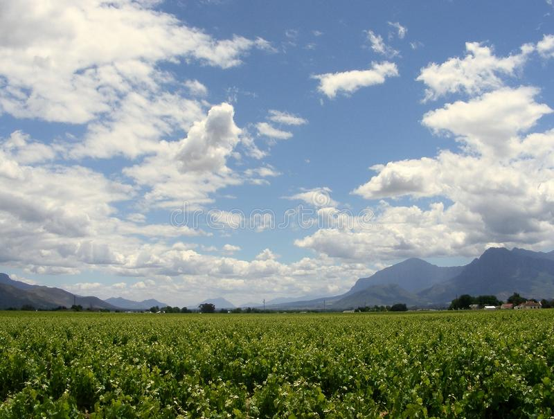 Cloudy skies. Blue and cloudy skies over a vineyard in the rural Western Cape SA stock photos