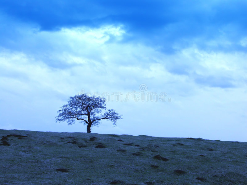 Cloudy skies and tree stock images