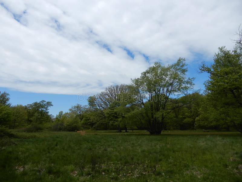 Cloudy sky over pastoral forest stock photography