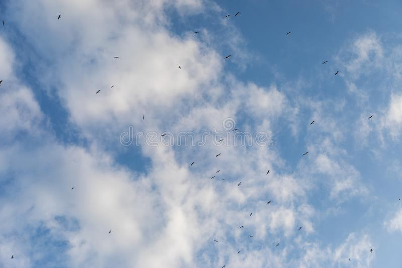 Cloudy sky with seagulls far away stock photo