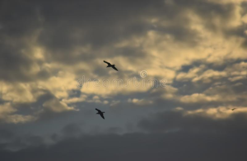 Cloudy sky on a summer day royalty free stock photography