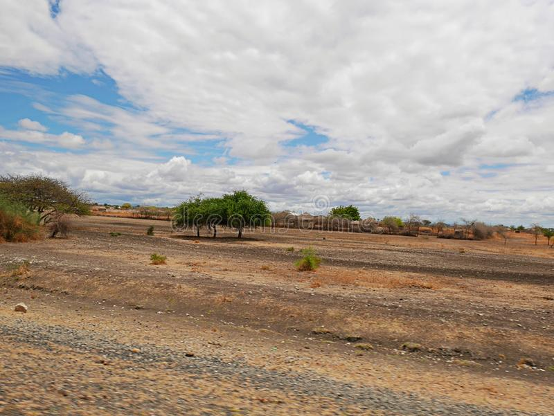 Yellow earth in Africa. Cloudy sky in Tanzania, Yellow earth in Africa, Africa, to meet adventures, safaris, Tarangiri, drought, Ngorongoro,gray earth, the royalty free stock photo