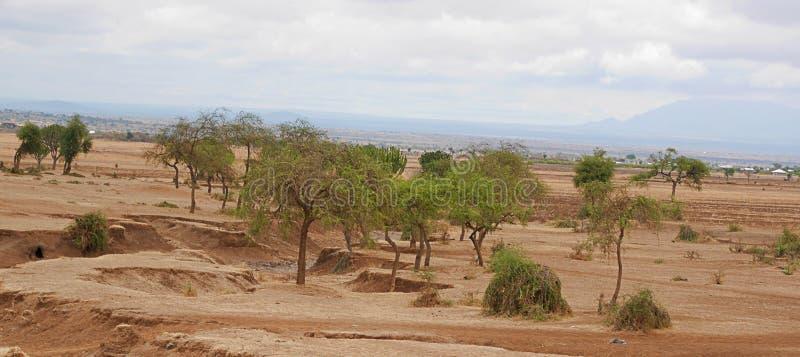 Yellow earth in Africa. Cloudy sky in Tanzania, Yellow earth in Africa, Africa, to meet adventures, safaris, Tarangiri, drought, Ngorongoro,gray earth, the stock photos