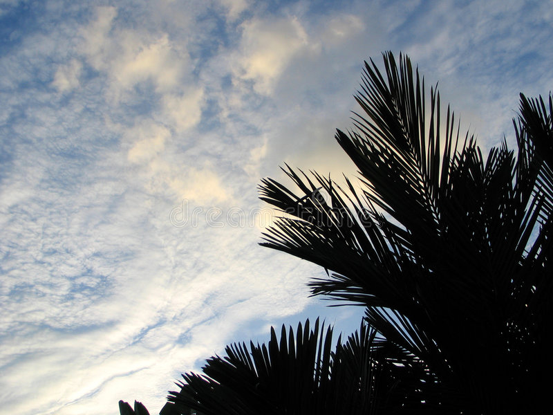 Download Cloudy Sunset stock photo. Image of palm, sunset, coconut - 26958