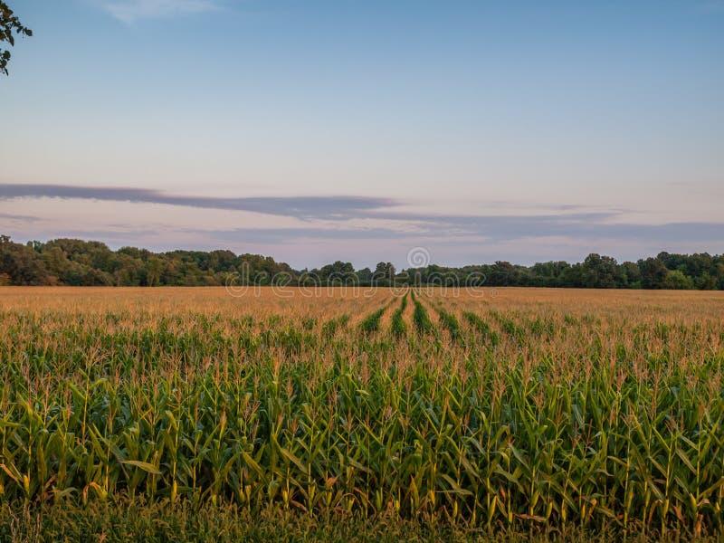 Cloudy Sunset Over Rural Corn Crop Farm Field stock photos