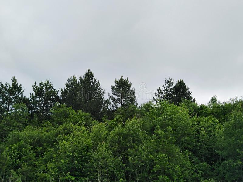 Cloudy weather. Forest, green, tree stock photos
