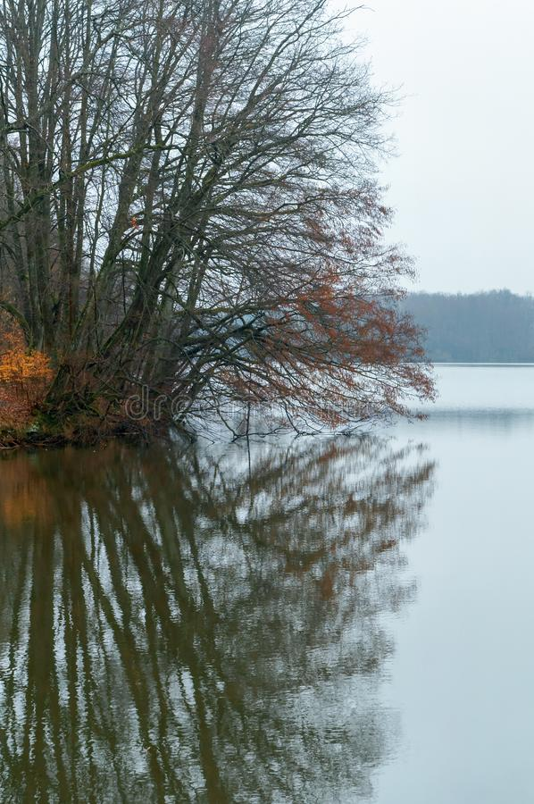 Reflecting tree in late autumn, cloudy weather on the lake. Cloudy weather on the lake, reflecting tree in late autumn royalty free stock photos