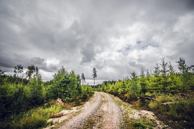 Cloudy weather over a dirt road. Surrounded by small pine trees in a Scandinavian forest stock images