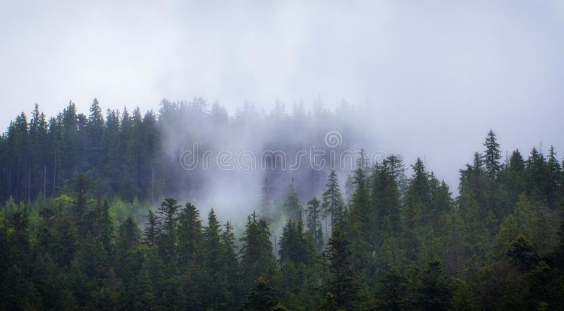 Cloudy weather in the Ukrainian Carpathians, fog rises from the forest.  royalty free stock photo
