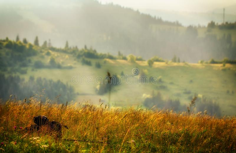 Cloudy weather in the Ukrainian Carpathians, fog rises from the forest.  stock image