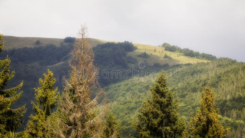 Cloudy weather in the Ukrainian Carpathians, fog rises from the forest.  royalty free stock images