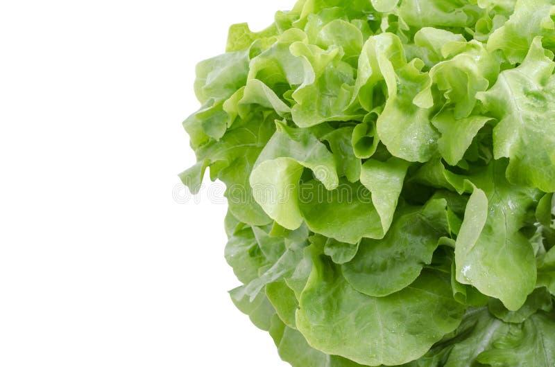 Clouse herauf frische grüne Eichensalatblätter stockfotos