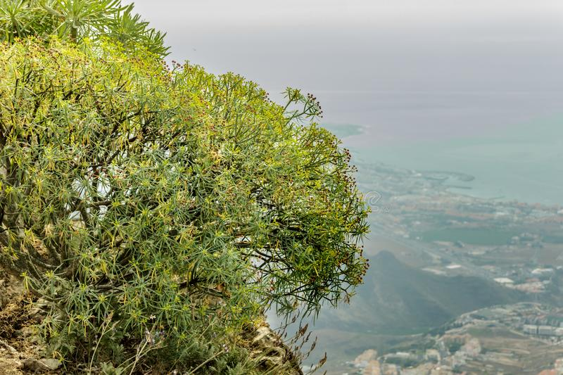 Clouse su ha sparato del milkweed endemico Fuoco selettivo Vista aerea vaga della linea costiera ad ovest nei precedenti Cielo e  fotografia stock libera da diritti