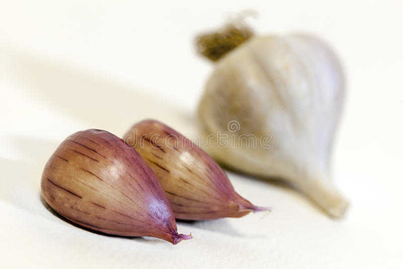 Clove of garlic stock photography