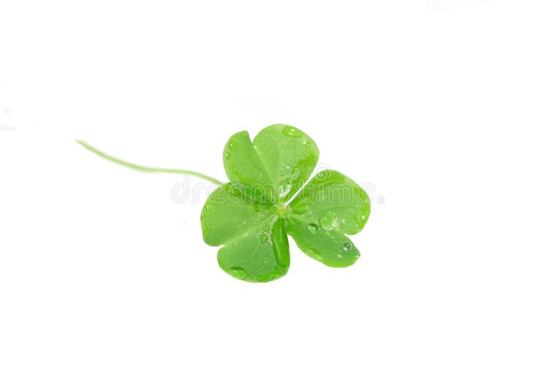 Clover stock photo