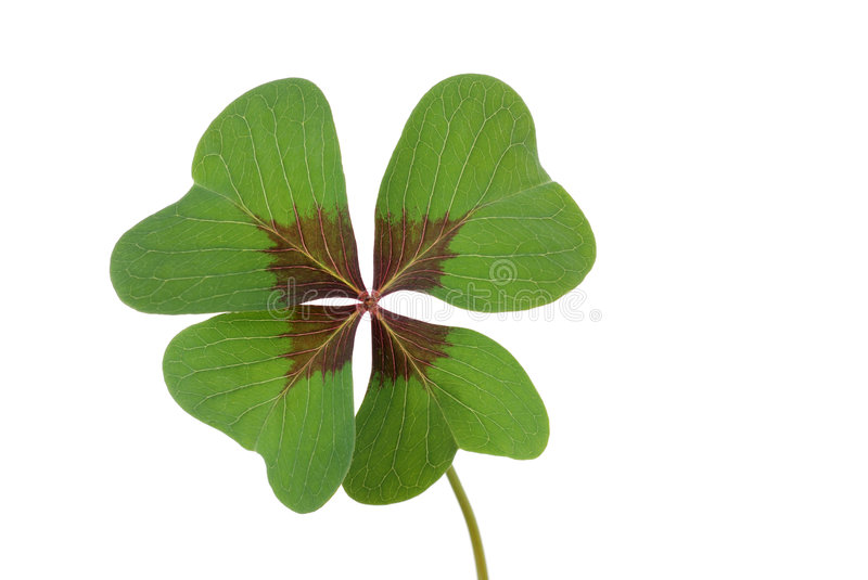 Download Clover stock photo. Image of silvester, luck, years, luckiness - 7001994