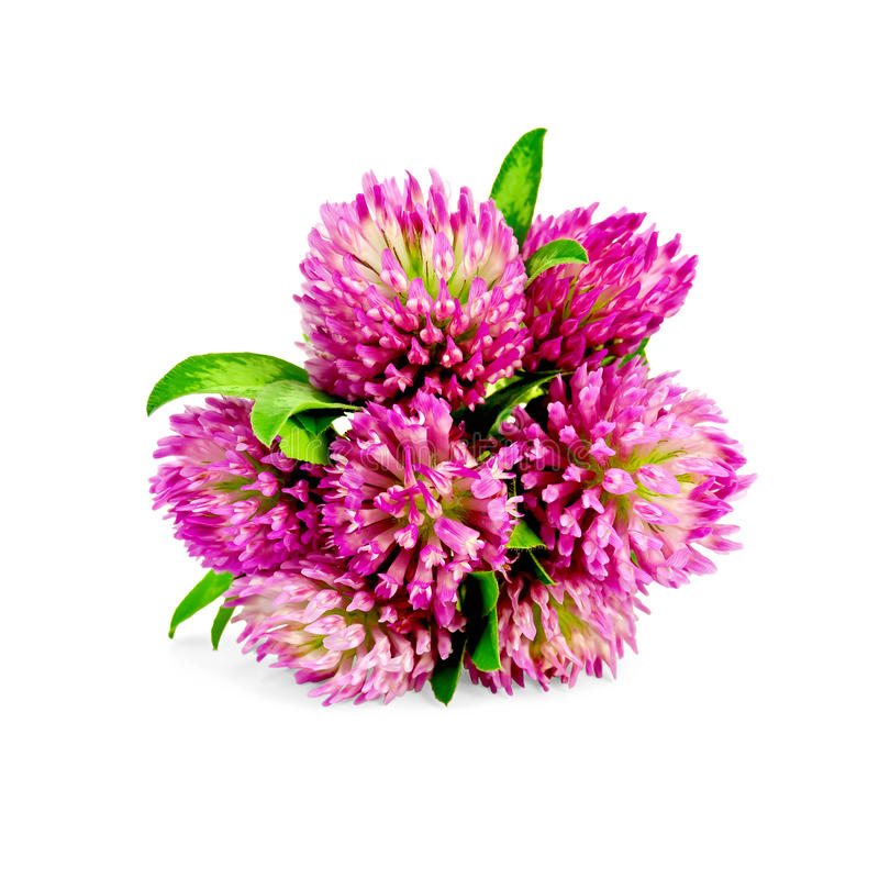 Clover bouquet royalty free stock image