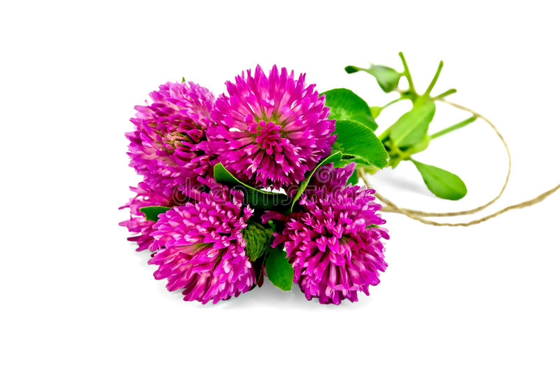 Clover bouquet tied with a rope royalty free stock photo
