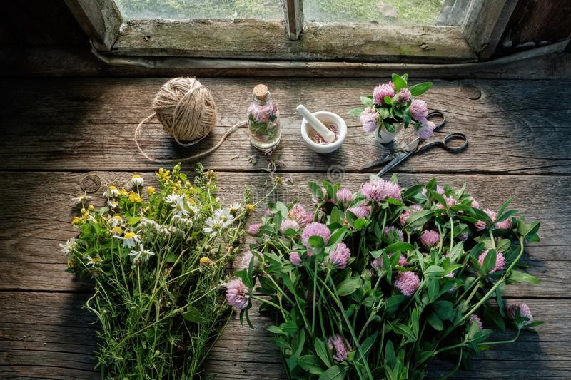 Clover, daisies and hypericum flowers, mortar, clover tincture or infusion, scissors and jute on wooden table inside retro house. stock photography