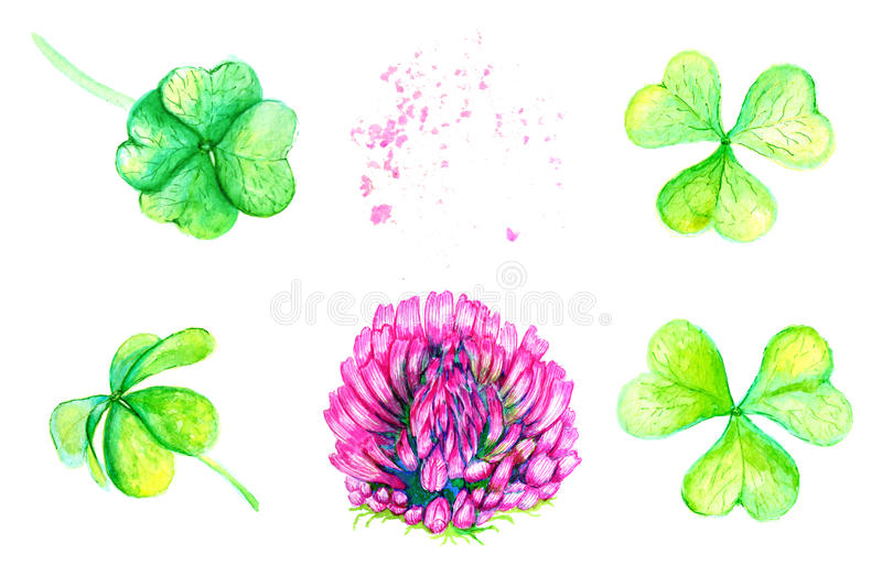 Clover Flower And Leaves. Drawing By Hand With Watercolors. Stock ...
