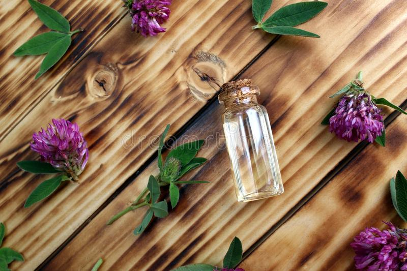 Clover flower oil aromatherapy to treat the body. Background, texture, flowers, flower, head, bud, wild, field, useful, medicinal, grass, folk medicine royalty free stock images