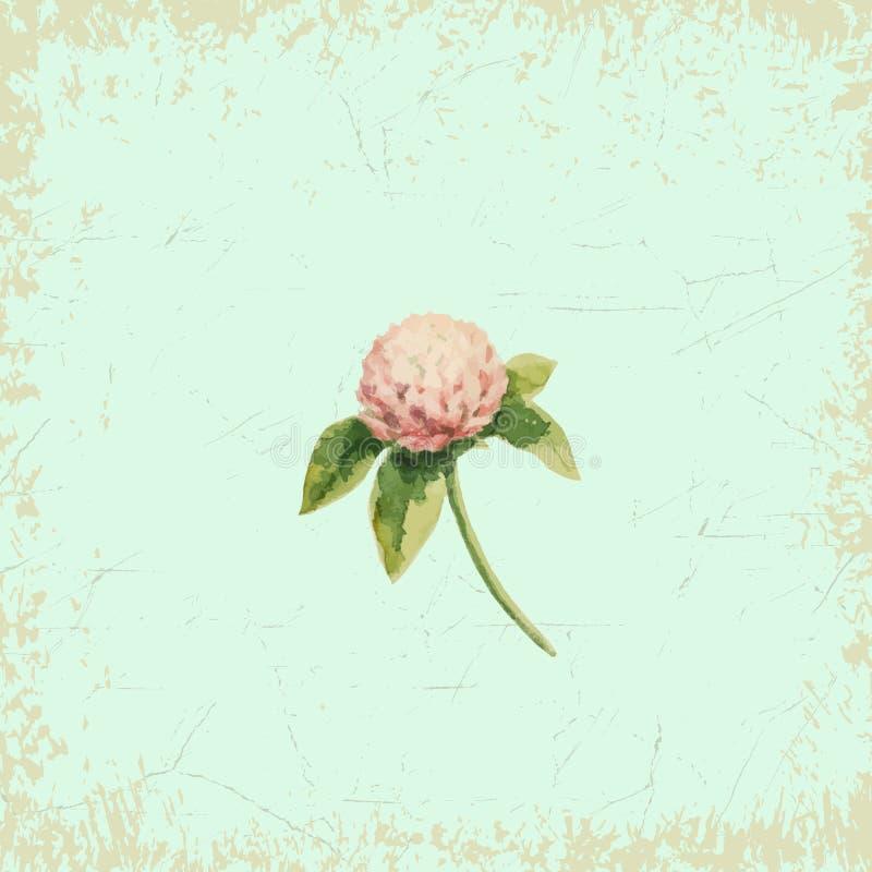 Clover flower stock illustration