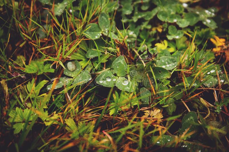 Clover In The Grass Free Public Domain Cc0 Image