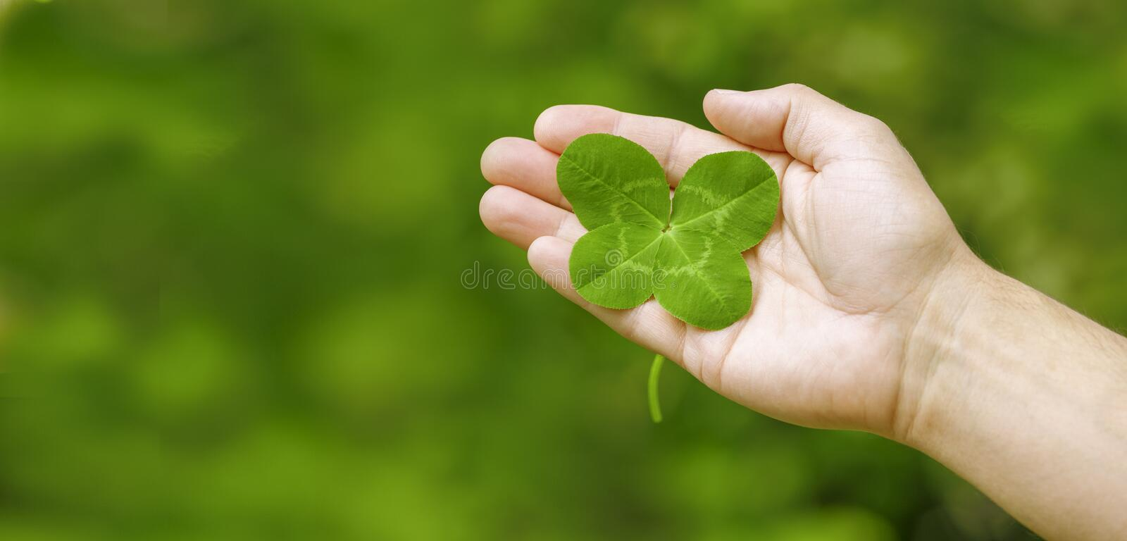 Clover in Hand royalty free stock images