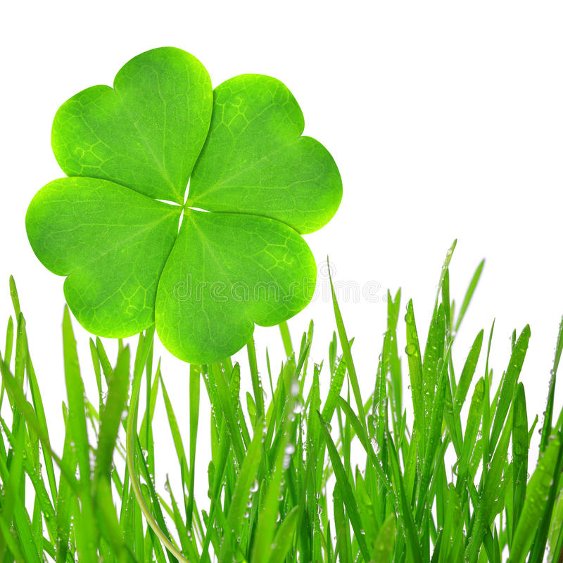 Download Clover leaf stock image. Image of beautiful, design, green - 39239827