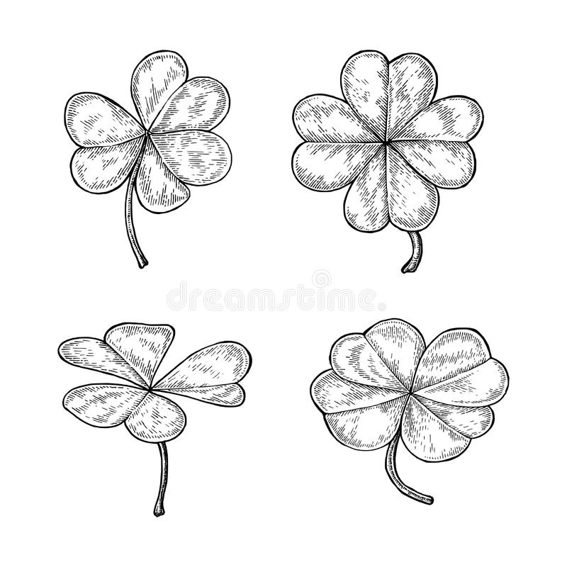 Clover leaf hand drawing vintage style isolate on white background. Happy and lucky day symbol stock illustration