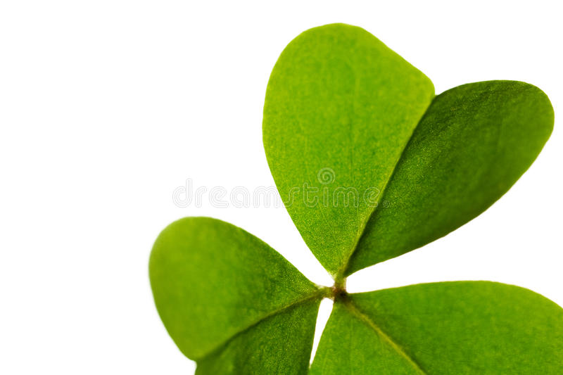 Download Clover Leaf Isolated. Royalty Free Stock Photo - Image: 15356125