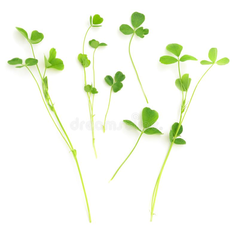2 553 Leaf Clover Stem Photos Free Royalty Free Stock Photos From Dreamstime