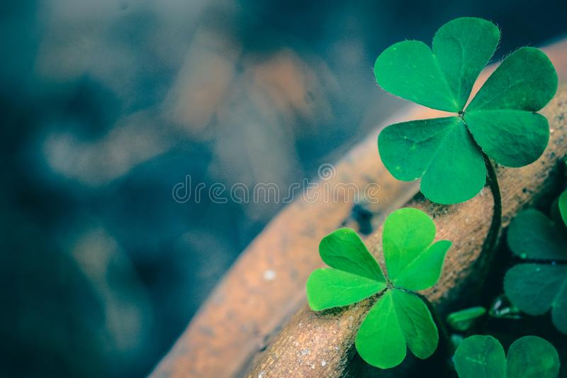 Clover Leaves for Green background stock images