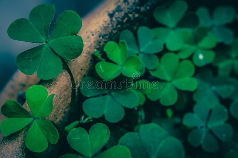 Clover Leaves for Green background stock photography