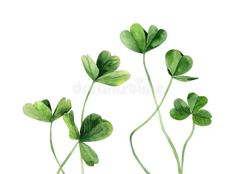 Clover Leaves Set Green Plant Stems Watercolir Illustration Isolated On White Background Stock Illustration Illustration Of Macro Design 182111251