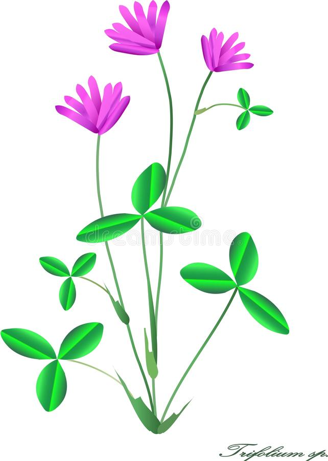 Clover with pink flowers and green leaves on white gradient stock download clover with pink flowers and green leaves on white gradient stock vector illustration mightylinksfo