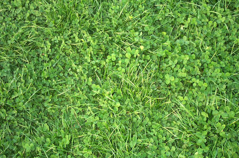 Clover texture stock images