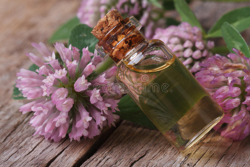 Clover tincture in a bottle nd flowers macro horizontal stock image