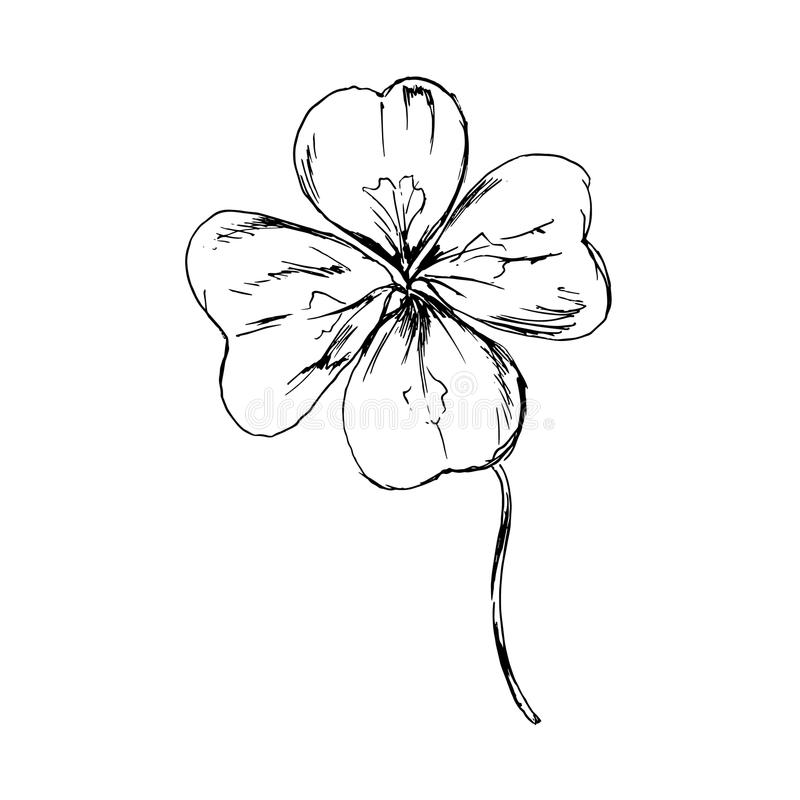cloverleaf illustration stock