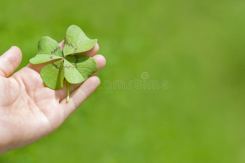 Cloverleaf in Hand. Of a child on green background royalty free stock images