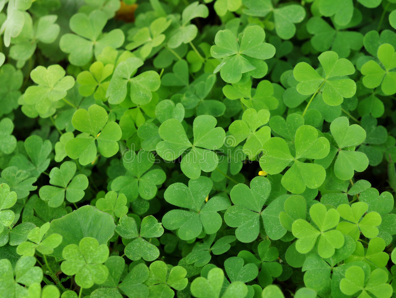 Download Clovers stock image. Image of design, natural, lucky, clover - 8685769