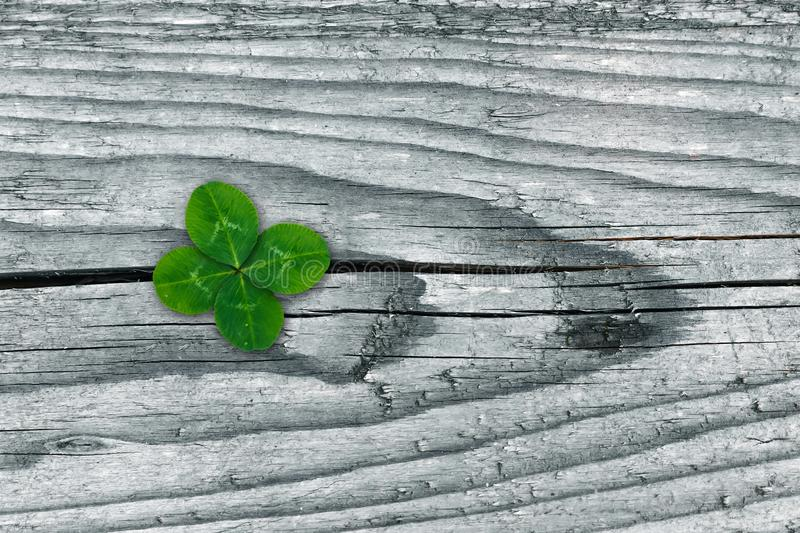 Clovers on grunge old aged wooden background, shamrock leaves, saint patrick`s day stock photos